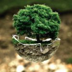 climate change, tree, eco, ecology, green